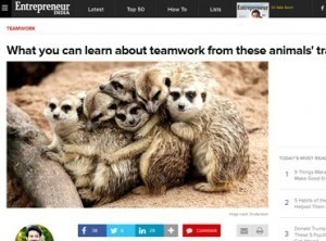 What can you learn about team work from these animals